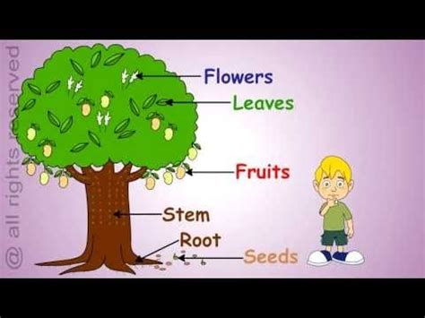 Essay on plants and trees
