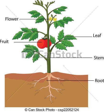 Free Essays on Plants Trees Save Life - Brainiacom